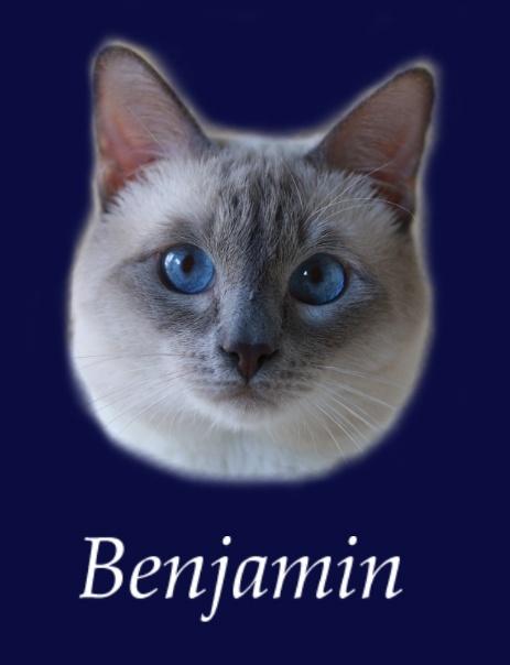 Nasze Koty Ameliapl Hodowla Kotów Tajskich Koty Syjamskie